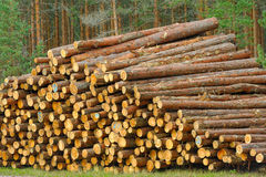 Pine timber Royalty Free Stock Images