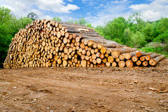 Free Pine Timber Stacked Royalty Free Stock Photo - 25457685