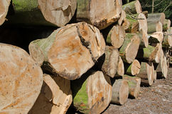 Pine timber stacked at lumber yard Stock Photos