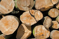 Pine timber stacked at lumber yard Royalty Free Stock Photos