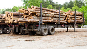 Pine timber stacked on trailers at lumber yard Stock Photos
