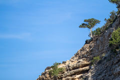 Pine tre on the cracked cliffs Royalty Free Stock Photos