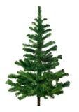 Pine tree. Isolated on white background stock photos