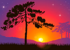 Pine tree. Highly detailed pine tree against a colorful sunset Stock Photo