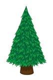 Pine tree. Cartoon pine tree on white background Royalty Free Stock Photos