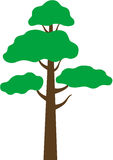 Pine tree vector illustration