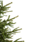 Pine-tree Royalty Free Stock Images