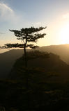 Pine tree. The pine tree in a mountain in china when the sunset Stock Images