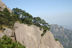 Pine tree. The pine tree in the mountain in china Stock Photo