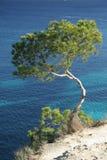 Pine tree. A pine tree above a sea in Mallorca, Balearic islands, Spain stock photos