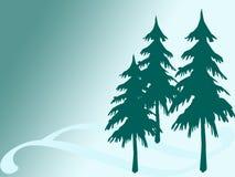 Pine tree. Three pine tree on turquoise background Stock Photography