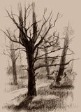 Pine-tree. Pine - tree. Hand drawing. sketch Royalty Free Stock Photo