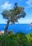 Pine tree above sea. Stock Images