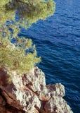Pine tree above the sea, Sveti Stefan, Budva Riviera, Montenegro. Pine tree on the cliff above Adriatic Sea, summer landscape Stock Photos
