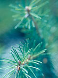 Pine Tree Abstract Stock Images