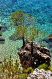 Pine tree against blue lagoon with turquoise sea Royalty Free Stock Photography