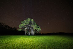 Pine tree against starry night sky. View on pine tree against starry night sky Stock Photo