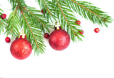 Free Pine Tree And Holly Frame Royalty Free Stock Image - 33684456