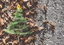 Pine tree and autumn leaves. Pine tree miniature on autumn leaves Stock Images