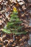Pine tree and autumn leaves. Pine tree miniature on autumn leaves Royalty Free Stock Photos