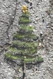 Pine tree and autumn leaves. Pine tree miniature on autumn leaves Royalty Free Stock Photo