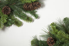 Pine Tree Background Royalty Free Stock Images