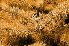 Pine Tree Background in sepia. This is a close up shot of pine tree branch like nice nature background, in sepia color Royalty Free Stock Photo