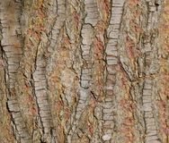 Pine tree bark Stock Photography