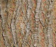 Pine tree bark Stock Photography