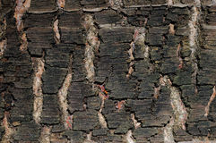 Pine tree bark Royalty Free Stock Photo