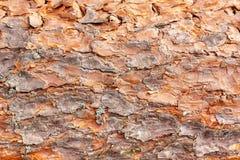 Pine tree bark background. stock photo
