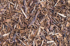 Pine tree bark chip background Stock Images