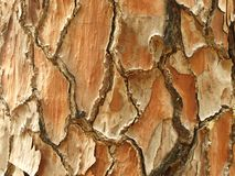 Pine tree bark detail. With a trail mark painted on it Stock Photography
