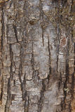 Pine tree bark detail in vertical format. Warm tone Royalty Free Stock Photos