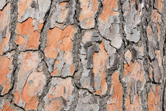 Pine tree bark detailled background Stock Photos