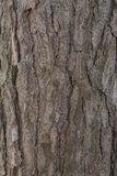 Pine tree bark Royalty Free Stock Photography