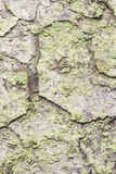 Pine tree bark texture background macro, selective focus, shallow DOF Stock Photo