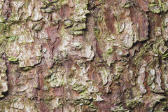 Pine tree bark texture background macro, selective focus, shallow DOF Stock Images