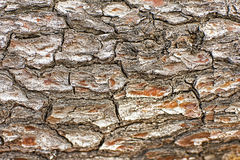 Pine Tree Bark Texture Background Pattern Royalty Free Stock Photos