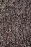 Pine Tree Bark Texture Royalty Free Stock Images