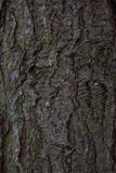 Pine Tree Bark Texture Stock Photography