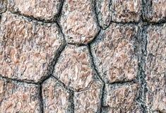 Pine tree bark texture. Stock Photos