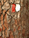 Pine tree bark with trail mark Stock Photo