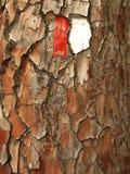 Pine tree bark with trail mark Stock Photo
