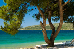 Pine tree on the beach. Pine tree on a beach with blue sea in the background Stock Images