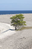 Pine tree and beach Royalty Free Stock Photos