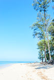 Pine tree on the beach and blue sky Stock Images