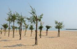 Pine tree on beach Royalty Free Stock Photos