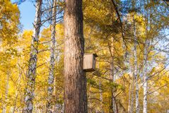 Pine tree with birdhouse in yellow forest Royalty Free Stock Photo