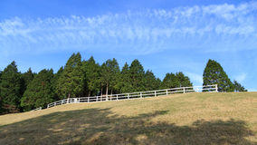 Pine tree and blue sky at Mount Rokko Ranch Stock Images